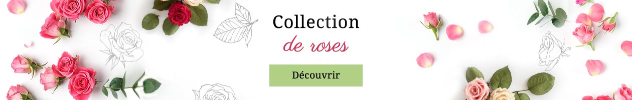 Collection de roses