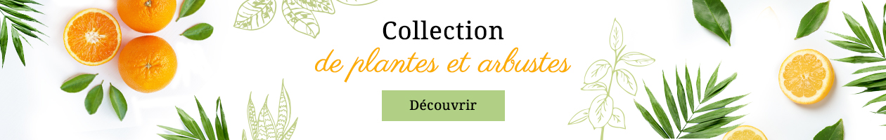Collection de plantes et arbustes