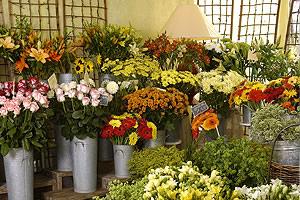 fleurs et sens fleuriste à muizon (51140)