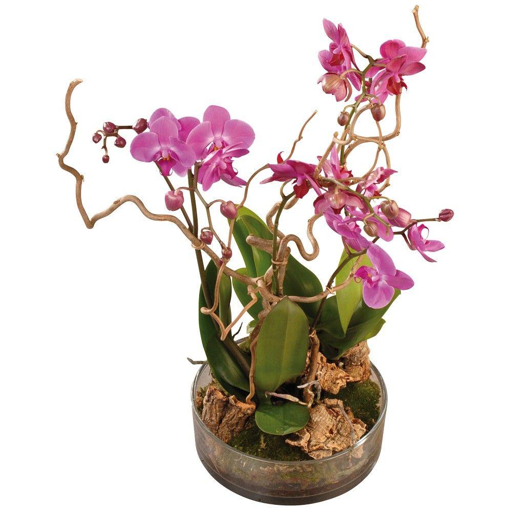 livraison orchid es composition de phanaenopsis florajet. Black Bedroom Furniture Sets. Home Design Ideas