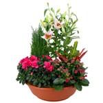 Fleurs deuil : Plantes Deuil pour obsèques.