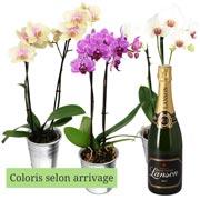 Plantes Vertes et fleuries 1 orchidee 2 branches + champagne lanson 75cl