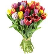 Bouquets de fleurs 15 tulipes