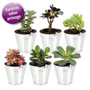 Plantes vertes et fleuries 6 MINI PLANTES GRASSES