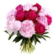 VENUS - florajet