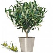 Plantes vertes et fleuries OLIVIER