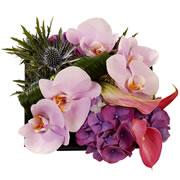 FAUVETTE - florajet