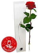 Bouquets de fleurs 1 rose rouge