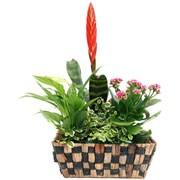 BROMELIA - florajet
