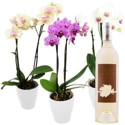 1 ORCHIDEE + VIN BLANC 75CL