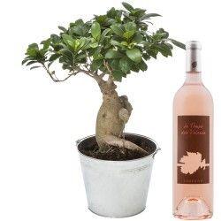 BONSAI GINSENG + VIN ROSE 75CL - 1