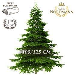 SAPIN NORDMANN 100/125CM