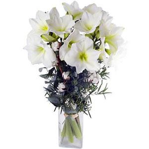 livraison du bouquet de fleurs jardin d hiver par florajet. Black Bedroom Furniture Sets. Home Design Ideas