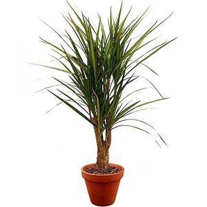 Livraison de la plante verte plante verte par florajet for Catalogue plantes vertes