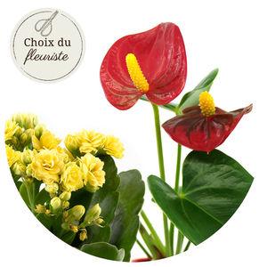 PLANTE FLEURIE AU CHOIX DU FLEURISTE