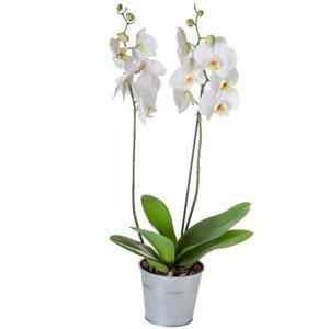 http://www.florajet.com/produits/300/961.jpg