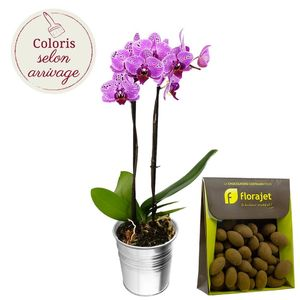 ORCHIDEE 2 BRANCHES + AMANDES