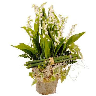 Livraison de fleurs livraison france for Livraison fleurs france