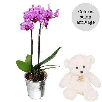 livraison de fleurs orchidee 2 branches ourson blanc livraison france express. Black Bedroom Furniture Sets. Home Design Ideas