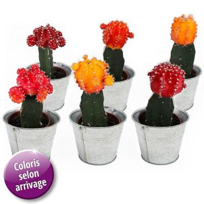 livraison de fleurs 6 mini cactus couleurs livraison france express. Black Bedroom Furniture Sets. Home Design Ideas
