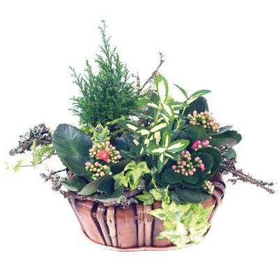 Livraison de fleurs corbeille nature for Livraison de fleurs demain