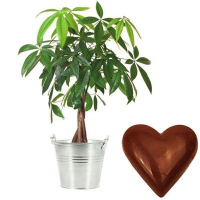 livraison de cadeau gourmand pachira coeur en chocolat par florajet livraison france. Black Bedroom Furniture Sets. Home Design Ideas