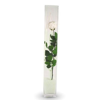 Livraison du collector rose eternelle blanche vase par for Livraison rose