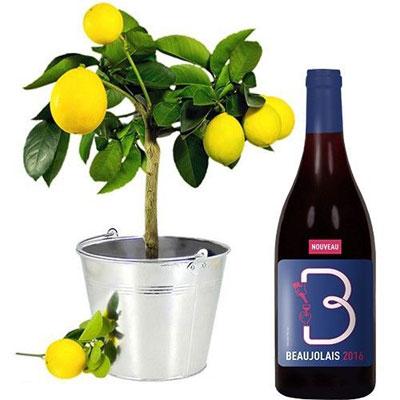 livraison de cadeau gourmand citronnier beaujolais nouveau par florajet livraison. Black Bedroom Furniture Sets. Home Design Ideas