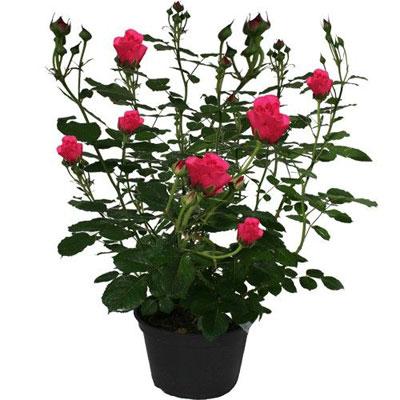Livraison de fleurs livraison france livraison par for Fleurs livraison demain
