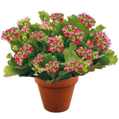 livraison de fleurs : (livraison : suisse)
