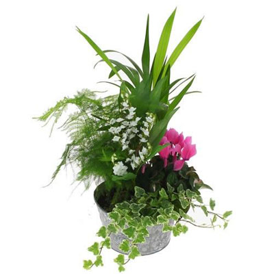 Livraison de la composition florale landes par florajet for Livraison composition florale