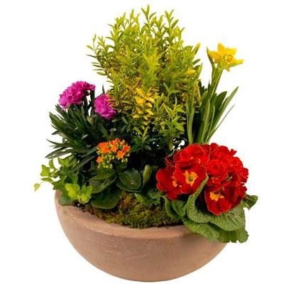 Livraison de la composition florale myrtille par florajet for Livraison composition florale