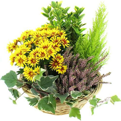 livraison de plante de deuil espoir par florajet. Black Bedroom Furniture Sets. Home Design Ideas