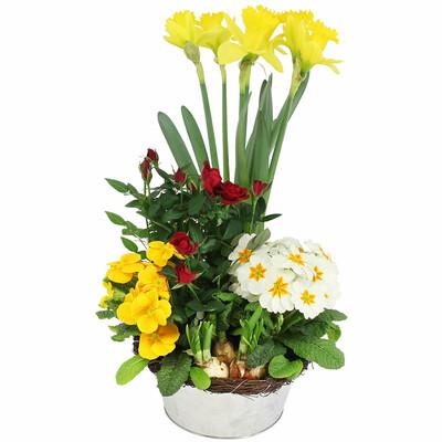 Livraison de la plante fleurie jardin ensoleille par for Jardin deluxe fleurs