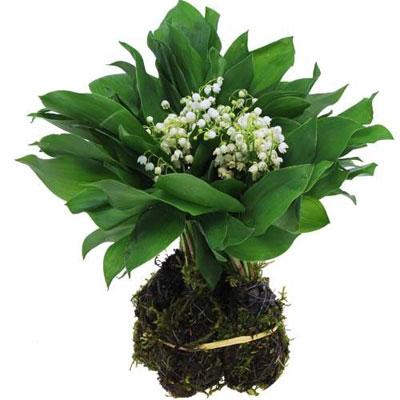 Livraison du bouquet de fleurs 30 brins de muguet des for Bouquet de fleurs muguet