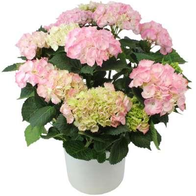 Livraison de fleurs romy for Fleurs livraison demain