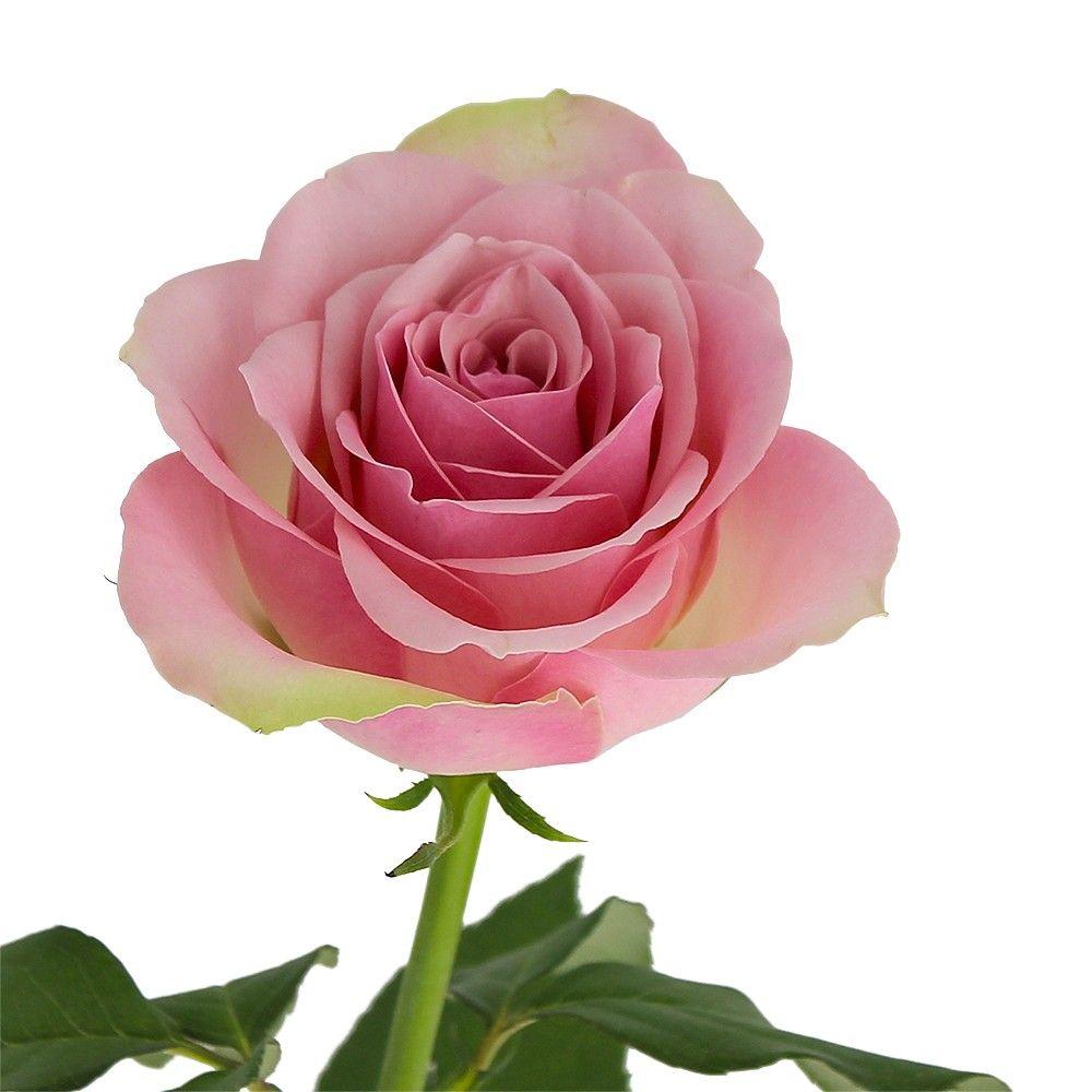 Livraison du bouquet de roses singulier par florajet for Bouquet de rose
