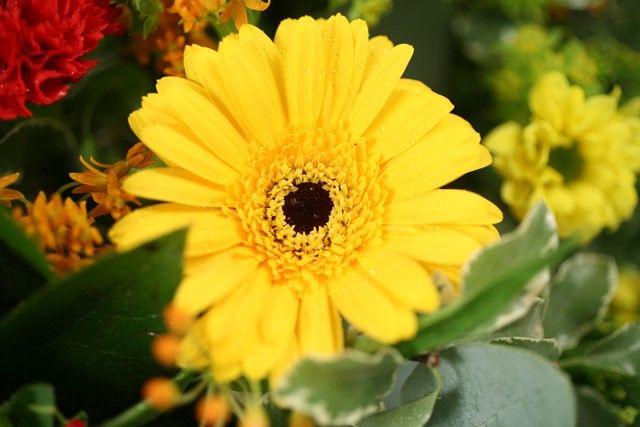 Livraison de fleurs livraison france pro for Fleurs livraison demain