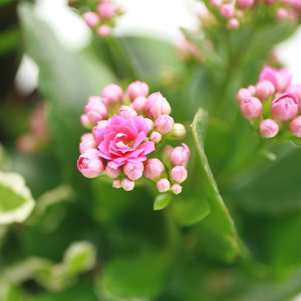 Livraison de fleurs bromelia for Fleurs livraison demain