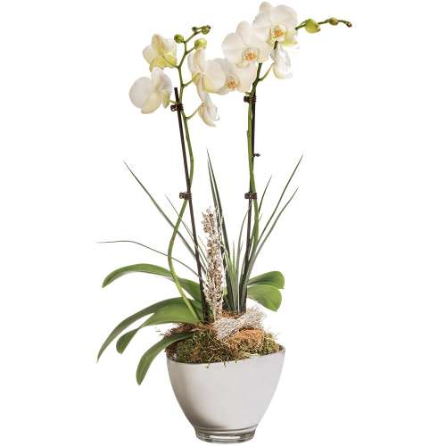 ORCHIDEE BLANCHE 2 BRANCHES - 1