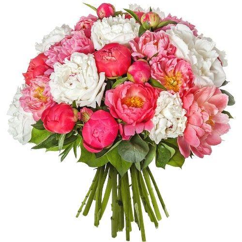 livraison du bouquet de fleurs anniversaire 30 pivoines par florajet livraison france. Black Bedroom Furniture Sets. Home Design Ideas