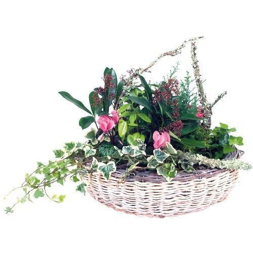 livraison de la plante fleurie panier boise par florajet. Black Bedroom Furniture Sets. Home Design Ideas