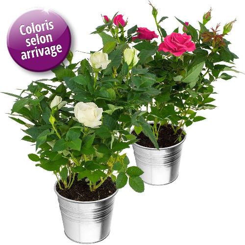 livraison de fleurs duo de rosiers livraison france express. Black Bedroom Furniture Sets. Home Design Ideas