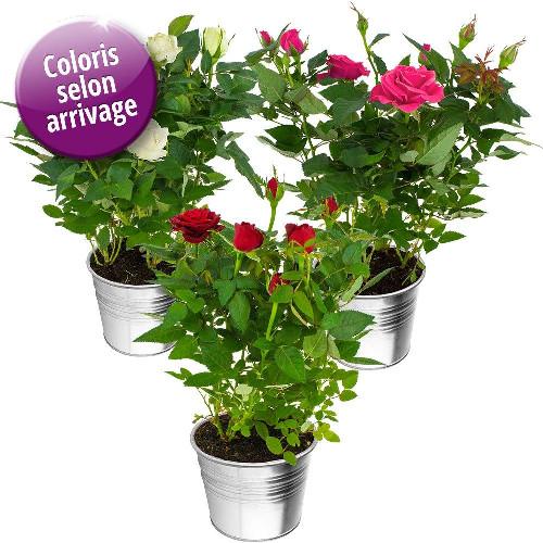 livraison de fleurs trio de rosiers livraison france express. Black Bedroom Furniture Sets. Home Design Ideas