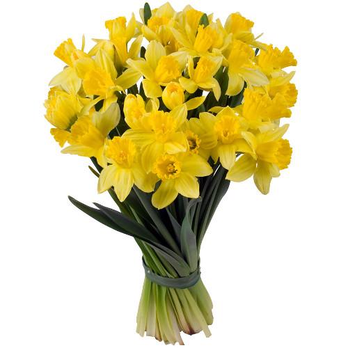 Bouquet de jonquilles MATISSE - Livraison Express | Florajet