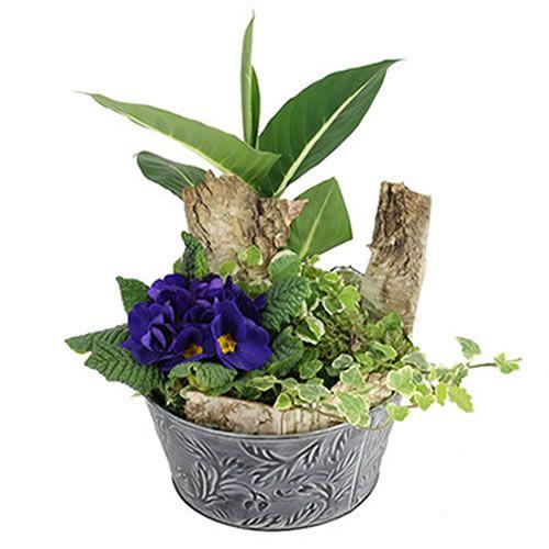 livraison de plante de deuil composition commemoration par florajet. Black Bedroom Furniture Sets. Home Design Ideas