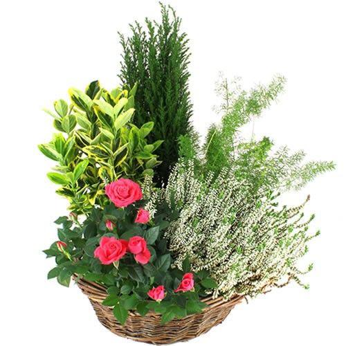 livraison de plante de deuil hommage par florajet. Black Bedroom Furniture Sets. Home Design Ideas