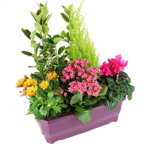 livraison de plante de deuil amour eternel par florajet. Black Bedroom Furniture Sets. Home Design Ideas