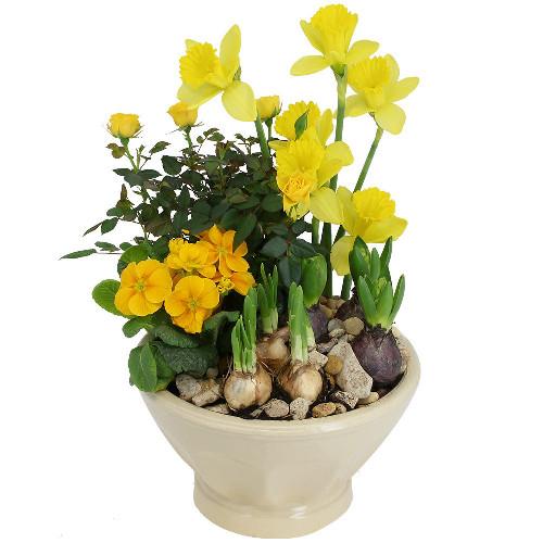 livraison de la plante fleurie jardiniere fleurie par florajet. Black Bedroom Furniture Sets. Home Design Ideas