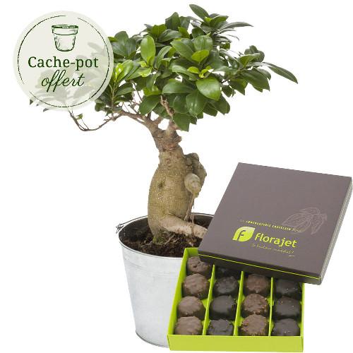 livraison de cadeau gourmand bonsai ginseng rochers au praline par florajet livraison. Black Bedroom Furniture Sets. Home Design Ideas